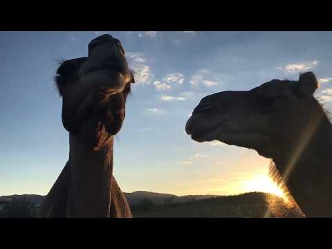 Nessie and Baby say hello to you all during beautiful sunset - kisses!
