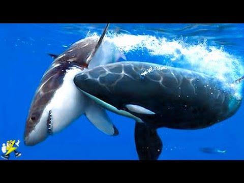 世界で最も恐ろしい海の生物8選 (Việt Sub)