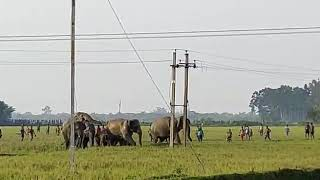 elephant attack,elephant attack 2019,elephant,elephant attack in india,elephant attack in kerala,ele
