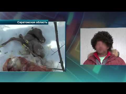 В Саратове полицейские поймали браконьеров, за которыми следили больше месяца