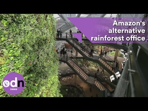 Amazon's alternative rainforest workspace