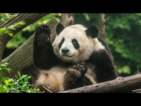 Chengdu: Best Places to Visit Travel Guide 2017