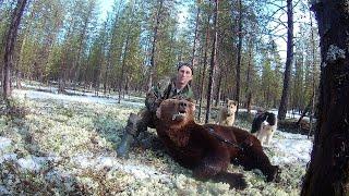 Охота на медведя с собаками. Весна 2019
