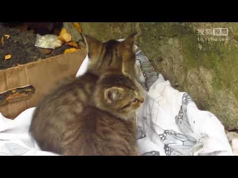 大灰猫怎么会跟狸花猫凑到了一起