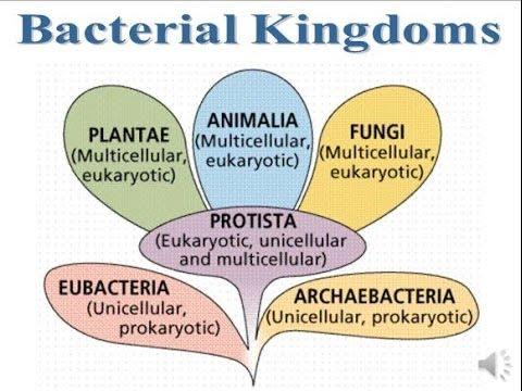 Bacteria Kingdoms Notes