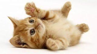 Gambar cover Kucing Merah Bermain Lincah Banget