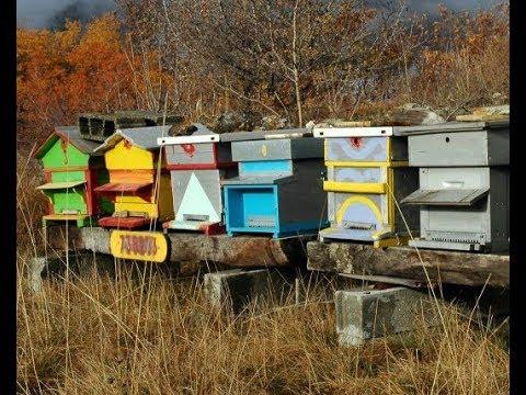 comment faire un essaim d 39 abeilles artificiel facilemen doovi. Black Bedroom Furniture Sets. Home Design Ideas