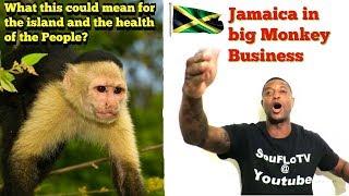 Imagine a Ebola breakout in Jamaica