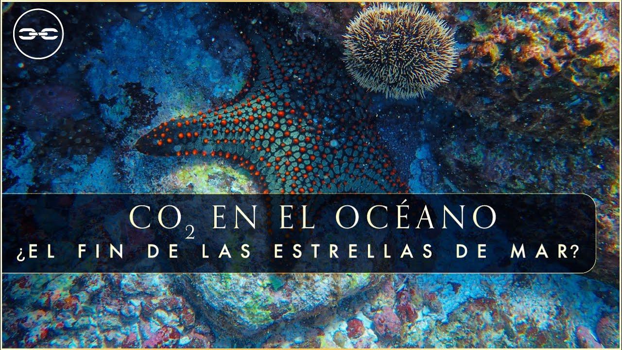 (VIDEO) Acidificación Oceánica: Cómo el CO2 pone en riesgo la vida en el Océano