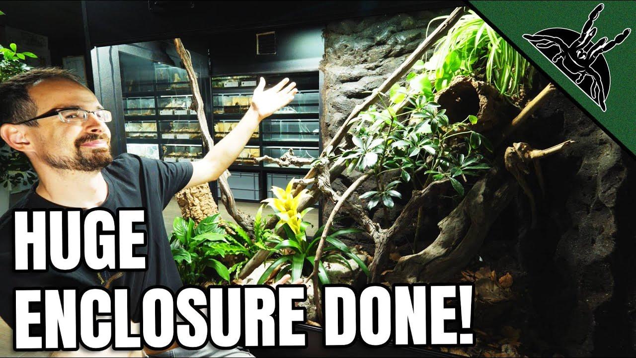 I BUILT HUGE VIVARIUM for Green Tree Monitor!