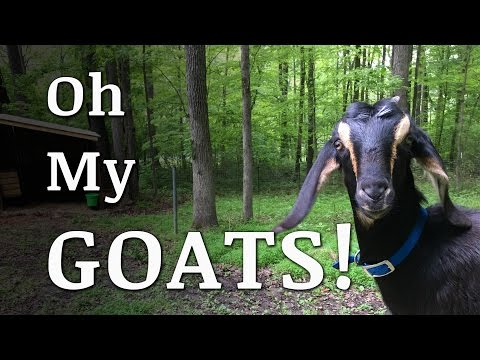 How We Got STARTED With Goats