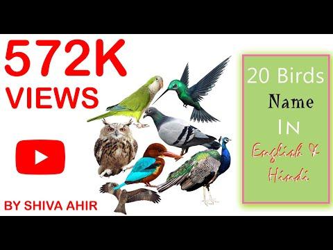 जाने 20 पक्षियो के नाम इंग्लिश ओर हिन्दी मे | 20 Birds Name In English & Hindi