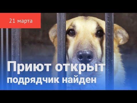 В Красноуфимске появился приют собаки ждут своих хозяев