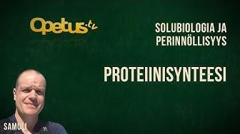 Proteiinisynteesi