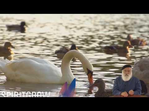 Tazria-Metzora  (For Shabbat Sat. 29 Apr - 3 Iyar) - Rabbi Laibl Wolf