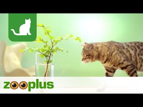Katzenstreu Cat S Best Zooplus Youtube
