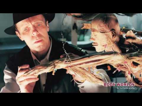 BODY WORLDS - The Cycle of Life