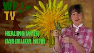 Dandelion is a Healing Herb! Make a Dandelion Salve.