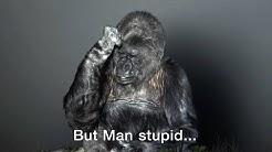 Koko Amazing Talking Gorilla - Befriends kitten & gorilla (recounts death of mother by poachers)