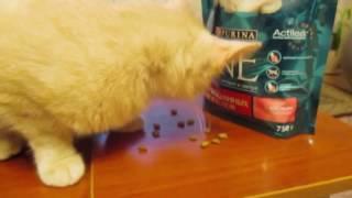 Обзор корма Purina ONE. На что готов кот ради корма?