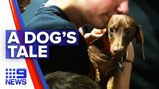 Dog reunited with family after global border closures | 9 News Australia