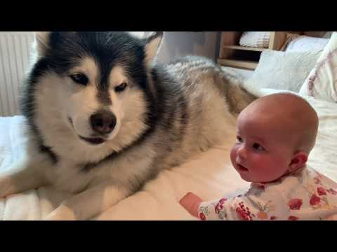Dog Tries To Teach Baby To Crawl (Cutest reaction!!)