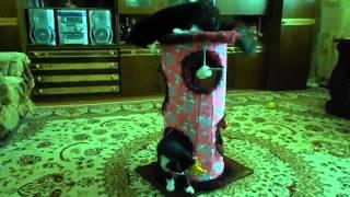 коты хулиганы