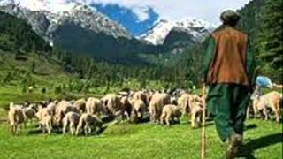 Azad Jamu Kashmir mein Goat Farming Tips Dr Ashraf Sahibzada