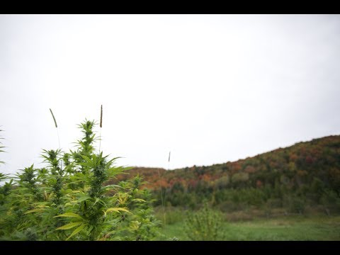 Heady Vermont Presents: Vermont Hemp Harvest Highlight ft. Creek Valley Cannabidiol