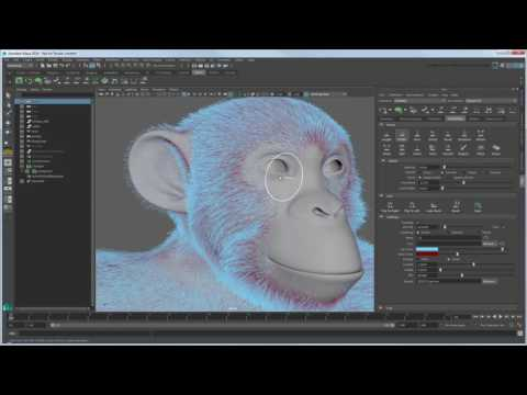 CGI 3D Tutorials : Expert Over The Shoulder Grooming Chimpan