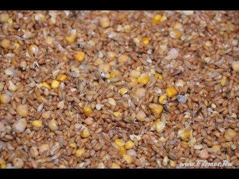 Овес зерно в Казахстане – цены, фото, отзывы, купить овес