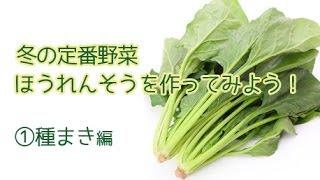 家庭菜園 ほうれん草の育て方(1)種まき編 【花ちゃん園芸ショップ】