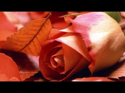 Autumn Love Song | Music Box | Relaxing Music HD 1080p