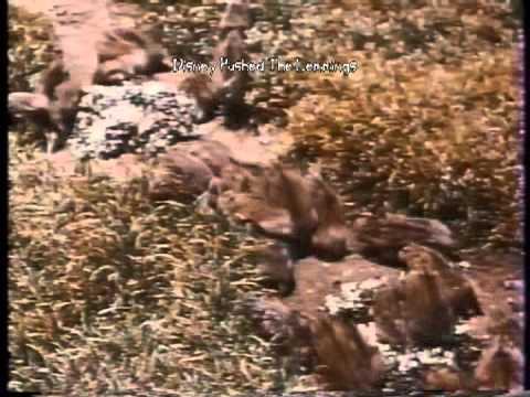 Disney Pushed The Lemmings - YouTube