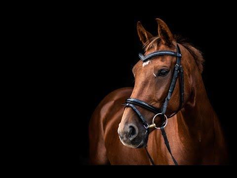 Mama [Equestrian Music Video]