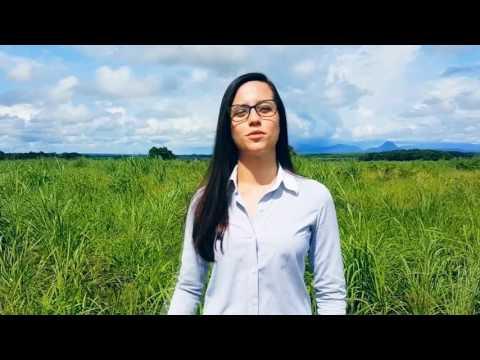 video forragem andropogon fazenda dons Leila