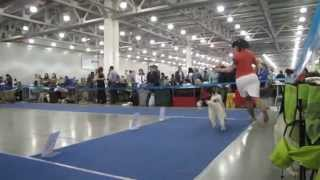 "International Dog Show ""eurasia- 2"" 23.03.2014. Siberian Husky Puppies."