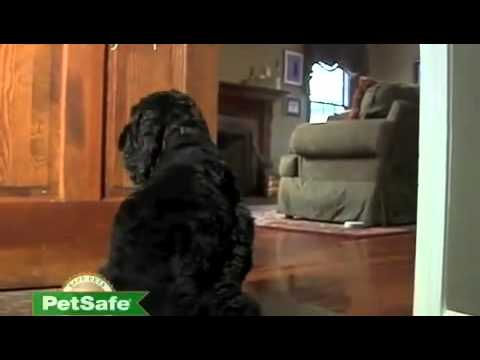 Petco Product Feature: PetSafe Pawz Away Indoor Pet Barrier ...