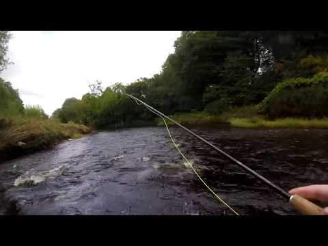 How To Fly Fish For Wild Brown Trout In UK/Irish Rivers Using Wet Flies