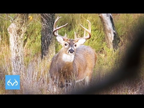 Oklahoma TANK Of A Buck | Dave Bogart Hunts The Rut | Monster Bucks Monday Presented By Midway USA