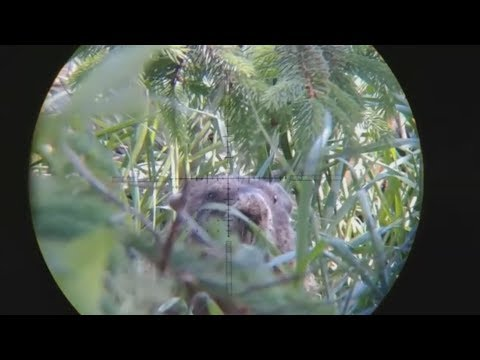 Woodchuck Hunting - 2018 Scope Cam Compilation (HUNTING/SHOOTING)