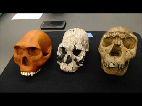 Physical Anthropology Skull Review Practicum