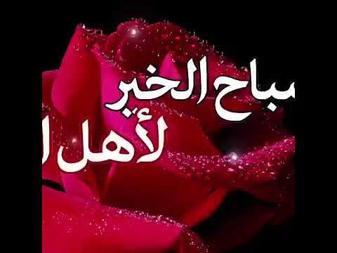 حالات صباح الخير فيديو واتساب مقصوصه جميله حاله واتس فيديو صباح