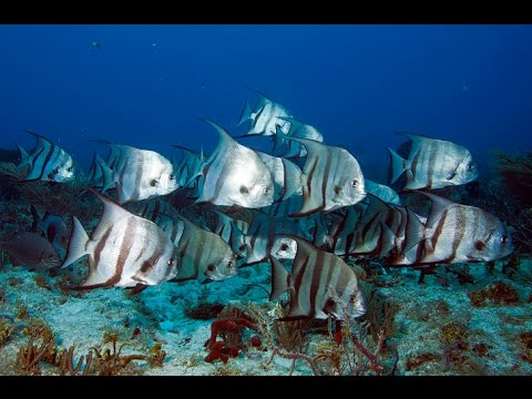 DIVE KEY LARGO 2015...Hole in the Wall on Molasses Reef