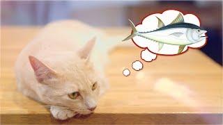 Cat Loki | EP1 | Homemade Cat Food | Butternut Pumpkin & Chicken Hearts