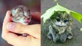 Cute Cat Video 😘 Kittens Take My Heart 😍 Cute Cats Compilation 2019