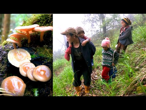 Life With Nature || Video - 49 || Finding Mushroom In The Jungle For Curry ||