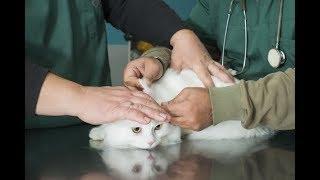 Как осуществить мечту и открыть собственную ветеринарную клинику