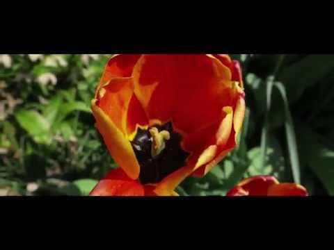 Lorchhausen-Edit / Cinematic