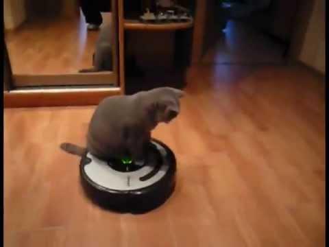 Кот бьет собаку на пылесосе